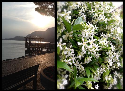 garda, lake garda, flowers, lake, italy
