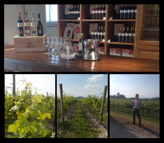 lake garda, bardolino, lamberti, wine, vineyard, wine tour