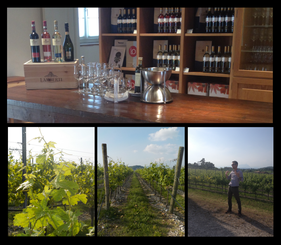 lake garda, bardolino, lamberti, wine, vineyard, wine tour