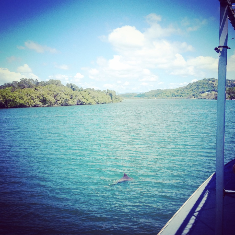 Dolphin spotting on the Tweed River, NSW Australia